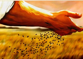 cropped-blog-seeds-in-hand1.jpg