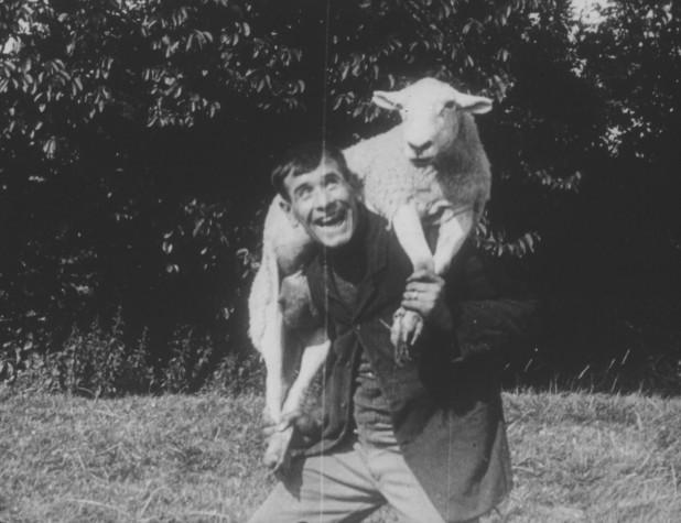 Blog Sheep Stealing